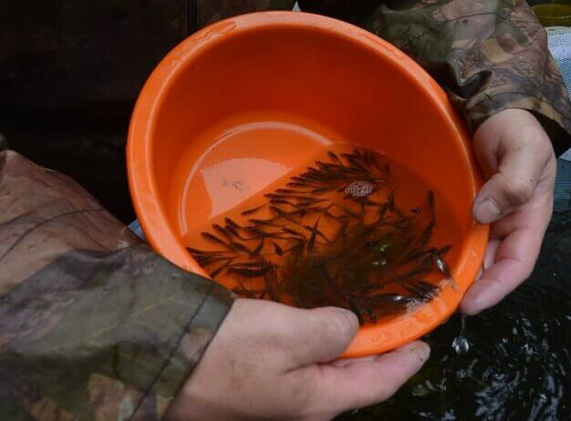 Datování ryb