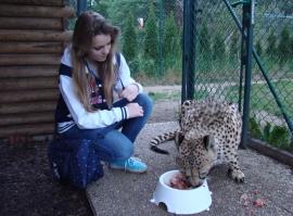 Krmení geparda, ocelotů a rysů