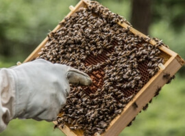 Staňte se včelařem