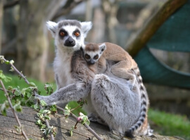 Rodinné krmení zvířat v Zooparku
